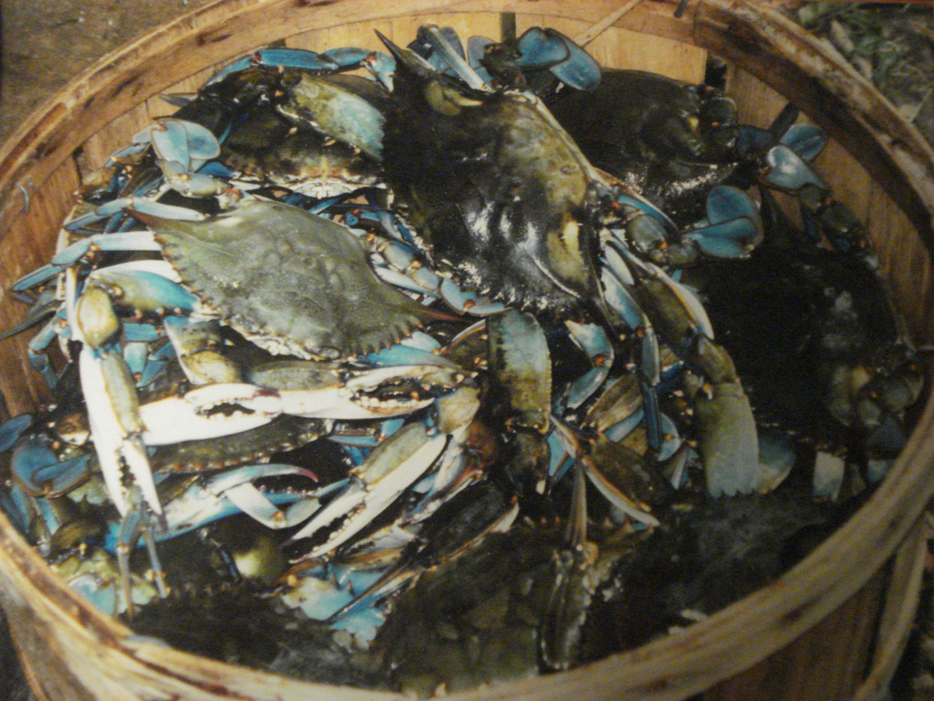 Blue crabs, Old Bay, good times, oh my!