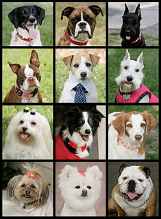 """woof! woof! = me likey the tv show """"Greatest American Dog"""""""